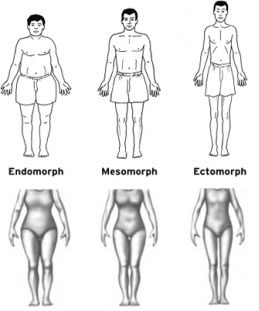 3 body types male & female