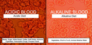 acidic alkaline blood