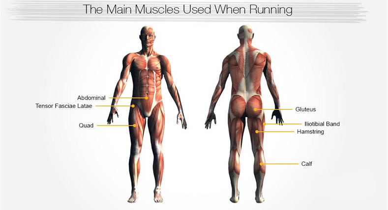 Does muscle increase running